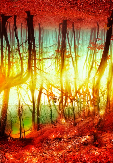 a photomanipulation of an impossible fantasy forest where there is no sky only trees upon trees.