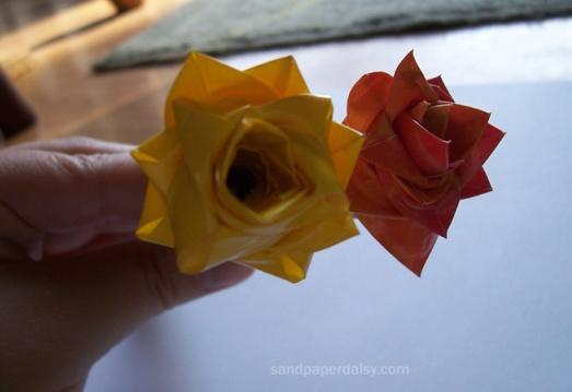 rose sandpaperdaisy 02