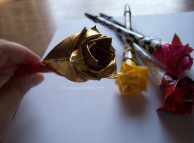 rose sandpaperdaisy 04