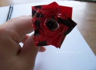 rose sandpaperdaisy 08