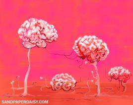 Brainforest_sandpaperdaisy