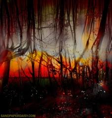 BurningForest_sandpaperdaisy