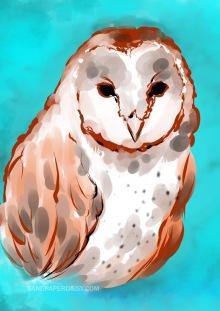Barn Owl_sandpaperdaisy