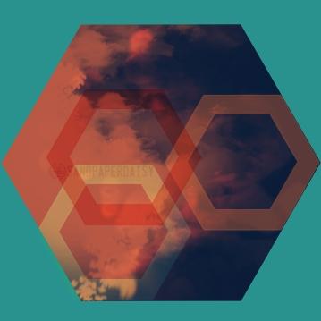 hexagon14_sandpaperdaisy