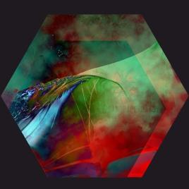 hexagon57_sandpaperdaisy