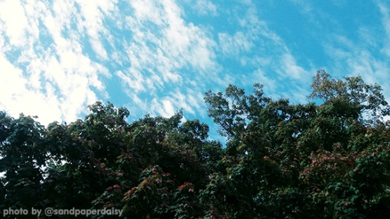 YART1019_sky-clouds-treetops_sandpaperdaisy